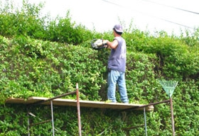 Expert Pruning & Hedge Trimming